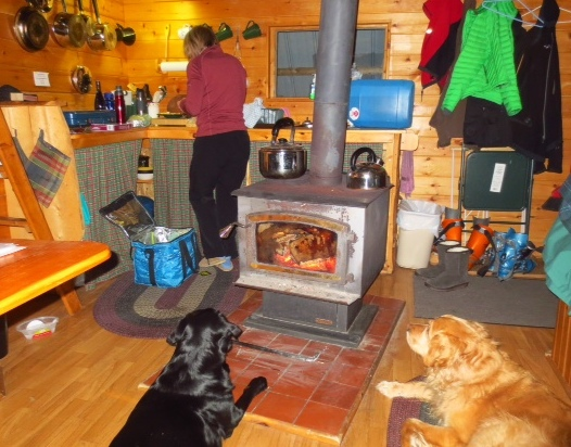 8 Tree Cabin inside with dogs.jpg